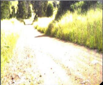 A dirt road. Most detail is gone because the photo is over-exposed.