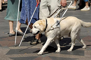 Figure 3 - person with a guide dog and cane